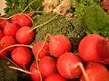 Radish, broccoli, DSCF2186.jpg