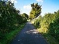 Radweg zwischen Edelfingen und Unterbalbach 2.jpg