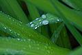 Rainy Day (3590360117).jpg
