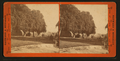 Rear of house showing pepper trees. Judge Halls, by Hayward & Muzzall.png