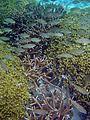 Reef0949 - Flickr - NOAA Photo Library.jpg