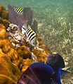 Reef Fish (6021866165).jpg