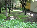 Reposo canino - panoramio.jpg