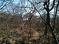 Respiradero - panoramio (1).jpg