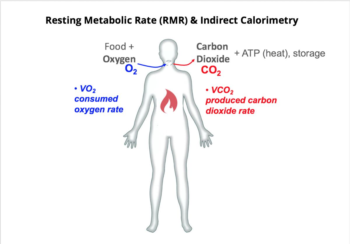 wiki basal metabolic rate