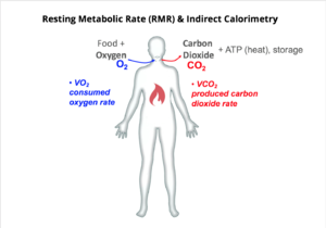 Resting metabolic rate - An overview of how oxygen and carbon dioxide relate to human energy expenditure