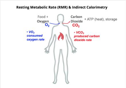 Rumoreado zumbido en Tipos de metabolismo expuesto