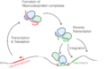 Retrotransposons.png