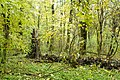 Rezerwat przyrody Morysin, park 7.jpg