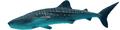 Rhincodon typus.png