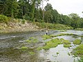 River Severn at Abermule - geograph.org.uk - 160411.jpg