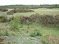 Rockford Common - geograph.org.uk - 8307.jpg