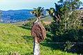Rural View BA-420 Maragogipe Bahia 0569.jpg