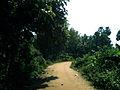 Rural dirt road at Peddipalem village.jpg
