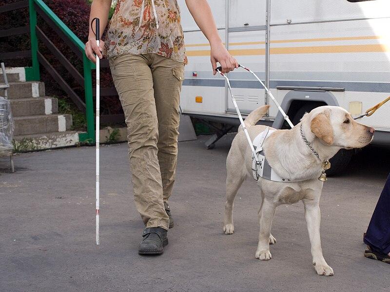 File:SVVP Klikatá, vedení nevidomého.jpg