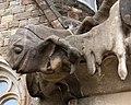 Sagrada Familia Decoration 6 (5839237567).jpg