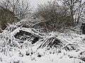 Saint-Just-d'Avray - Friche végétale sous la neige (fév 2019).jpg
