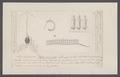 Salpa runcinata - - Print - Iconographia Zoologica - Special Collections University of Amsterdam - UBAINV0274 092 08 0031.tif