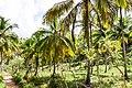 Samaná Province, Dominican Republic - panoramio (73).jpg