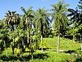 San Juan Botanical Garden - DSC06986.JPG