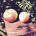 Sansa apples.jpg