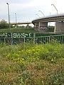 Saxifraga tridactylites + Euphorbia cyparissias sl1.jpg