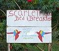 Scarlet Macaw B&B sign (16587571071).jpg
