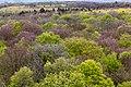 Schönstedt, Nationalpark Hainich, Ausblick vom Baumkronenpfad -- 2017 -- 0223.jpg