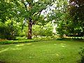 Schlosspark Köpenick - Wiese 1.jpg