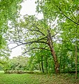 Schlosspark Laxenburg 8771 Mercator 6.jpg