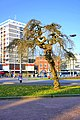 Seems like a willow tree, onset of spring - panoramio.jpg
