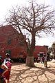 Senegal isola di Gorè baobab.jpg