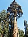 Sequoia Sentinel P4250887.jpg