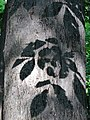 Shadow of Leaves on Tree Trunk - Botanic Gardens - Sapporo - Hokkaido - Japan (47984477973).jpg