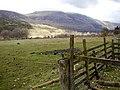 Sheep Pasture, Low Gillerthwaite - geograph.org.uk - 763552.jpg