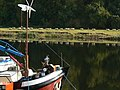 Sheep across the river - geograph.org.uk - 1536005.jpg