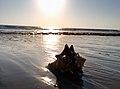 Shil beach, gujarat2.jpg