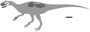 Sinotyrannus - Diagram of known fossil remains in grey