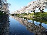 新境川堤・百十郎桜