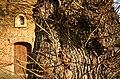 Sint-Catharinakapel met kapelbomen (opgaande linden) - 374478 - onroerenderfgoed.jpg