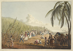 Plantation economy - Sugar plantation in the British colony of Antigua, 1823