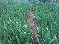 Small scale flower farming.jpg