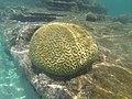 Snorkelling in Guna Yala - Panama - panoramio.jpg