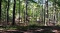 Sommerende im Warndt - panoramio.jpg