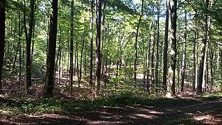 Warndt forest region at the border between Germany and France near Saarbrücken