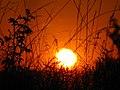 Sonnenuntergang Rodderberg.jpg