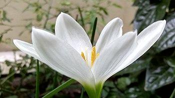 Special flower.jpg