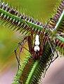 Spider Mom (53711170).jpeg