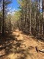 Spyglass Hill Trail 2017 3.jpg