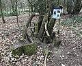 Stag Beetle Stumpery Aldershot.jpg